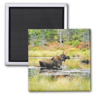 Moose in Water Watercolor Painting Wildlife Art Magnet