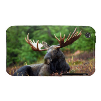 Moose iPhone 3 Covers