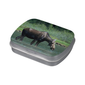 Moose Jelly Belly Candy Tin