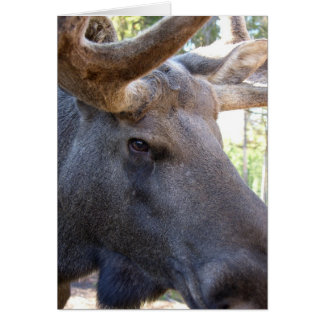 Moose King of the Forest Greeting Card