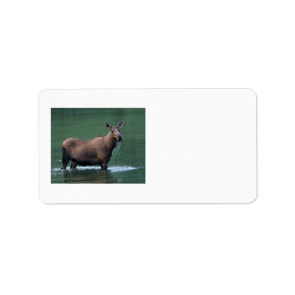 moose personalized address labels