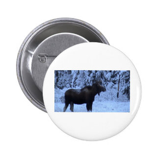 Moose loose in the snow pinback button