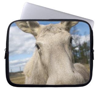 Moose on a field, Sweden. Laptop Sleeve
