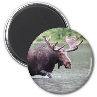 Moose on a Mission 2 Inch Round Magnet