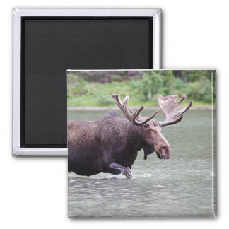 Moose on a Mission 2 Inch Square Magnet