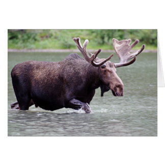 Moose on a Mission Greeting Cards