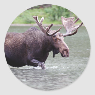 Moose on a Mission Classic Round Sticker