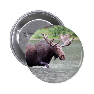 Moose on a Mission Pinback Button