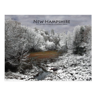 Moose on Snowy Oxbow: New Hampshire Postcard