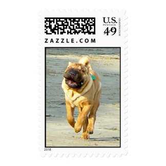 Moose On The Loose Postage Stamp