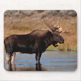 Moose Pad Mouse Pad