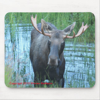 Moose Pad Mouse Pad