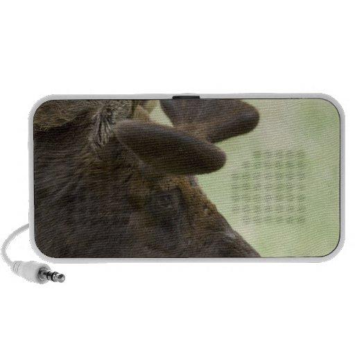 Moose Photo Speakers