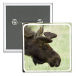 Moose Photo Square Pin