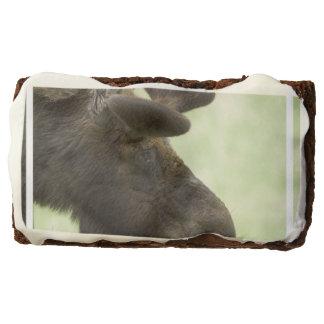 Moose Rectangular Brownie