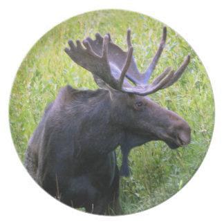 Moose photograph 1 dinner plate