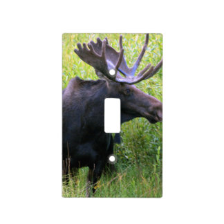 Moose photograph 1 light switch cover