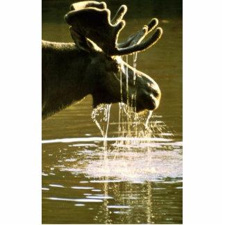 Moose Photo Cut Out