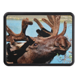 Moose Trailer Hitch Cover