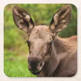 Moose Portrait Square Paper Coaster