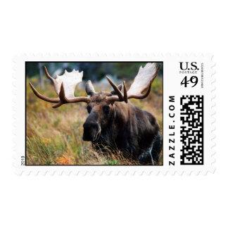 Moose Postage