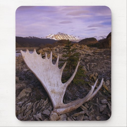 Moose Rack on the Alsek River Mouse Pad