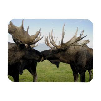 Moose Rectangular Photo Magnet