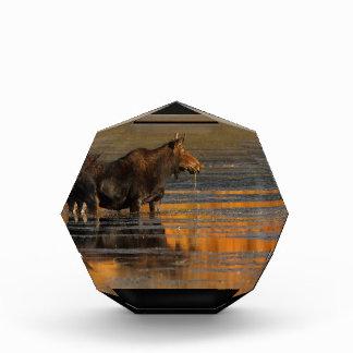 Moose & Reflections Award