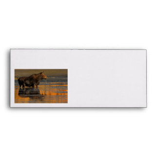Moose & Reflections Envelope