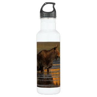 Moose & Reflections 24oz Water Bottle