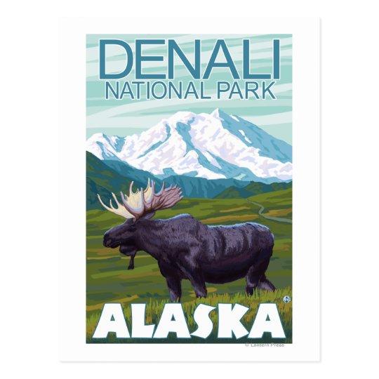 Moose Scene - Denali National Park, Alaska Postcard ...