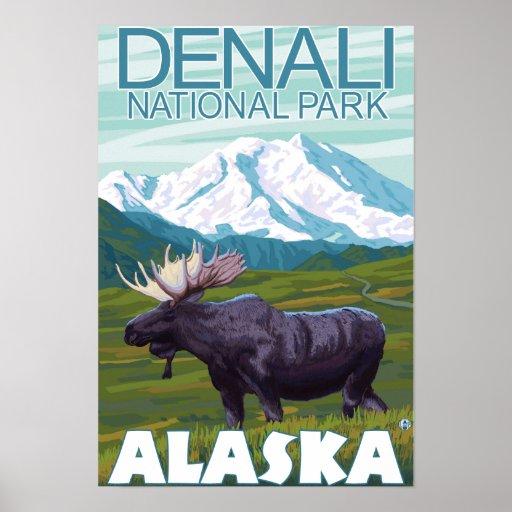 Moose Scene - Denali National Park, Alaska Poster
