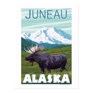 Moose Scene - Juneau, Alaska Postcard