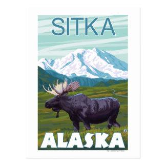 Moose Scene - Sitka, Alaska Postcard