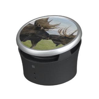 Moose Speaker