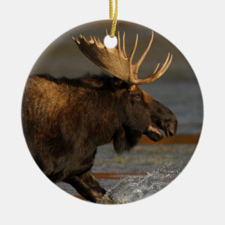 moose splash ceramic ornament