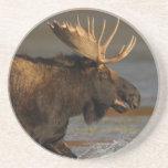 moose splash drink coaster