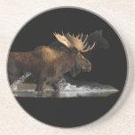 moose splashing after female beverage coaster