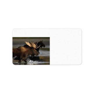 moose splashing in the water address label