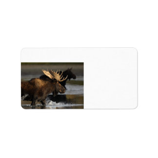 moose splashing in the water custom address label