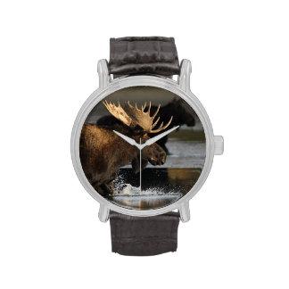 moose splashing in the water wrist watches