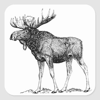 Moose Square Sticker
