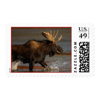 moose stamp