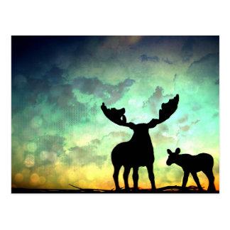 Moose Sunrise Postcard
