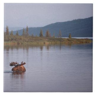 Moose Swimming in Lake Ceramic Tile