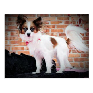 Moose The Papillon Glamor Dog Post Cards