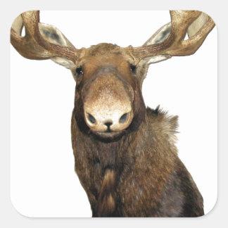 Moose Trophy Stickers