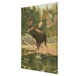 Moose Walking in Water Canvas Print