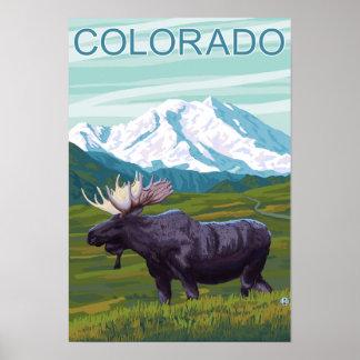 Moose with MountainColorado Poster