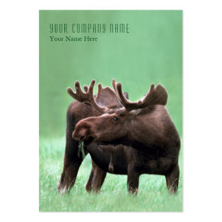 Moose with Velvet Antlers at Yellowstone NP Large Business Card